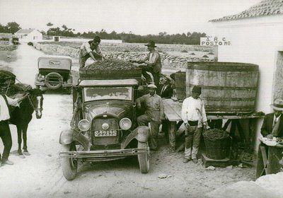 Sintra-rural-107