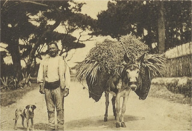 colares-agricultor